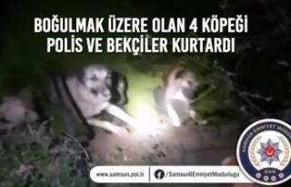 Boğulmak Üzere Olan 4 Köpeği Polis Ve Bekçiler...