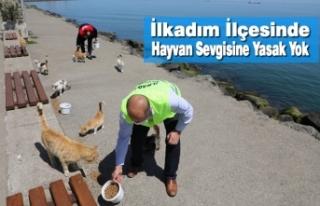 İlkadım Belediyesi Bayramda'da Sokak Hayvanlarını...