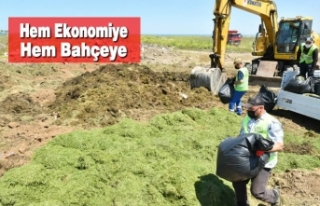 Samsun'da Budanan Dal ve Bitkiler Gübreye Dönüşüyor