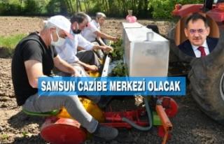 Tıbbi Aromatik Bitki Destekleri İle Büyükşehir...