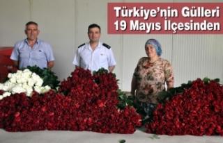 Türkiye'nin Gülleri 19 Mayıs İlçesinden