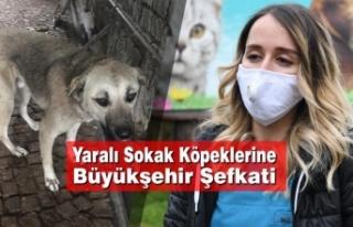 Yaralı Sokak Köpeklerine Büyükşehir Şefkati