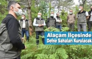 Alaçam'da Defne Sahaları Kurulacak