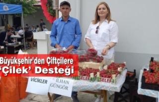 Büyükşehir'den Çiftçilere 'Çilek' Desteği