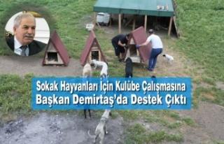 Sokak Hayvanları İçin Kulübe Çalışmasına Başkan...
