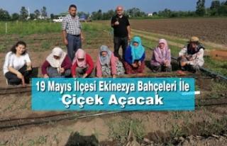 19 Mayıs İlçesi Ekinezya Bahçeleri İle Çiçek...