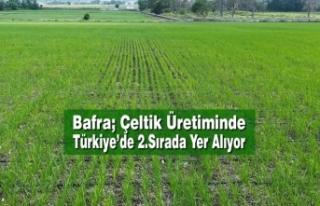 Bafra; Çeltik Üretiminde Türkiye'de 2.Sırada...