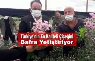 Türkiye'nin En Kaliteli Çiçeğini Bafra Yetiştiriyor