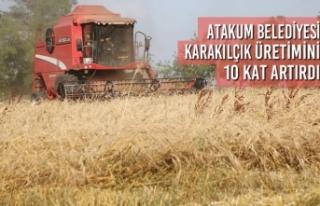Atakum Belediyesi Karakılçık Üretimini 10 Kat...