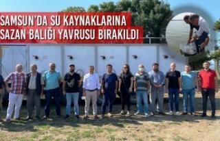 Samsun'da Su Kaynaklarına Sazan Balığı Yavrusu...