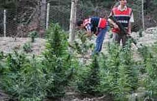 Adana'da Uyuşturucu Ve Kaçakçılıkla Mücadele...