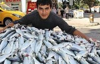 Karadeniz'de Çinakop Bereketi