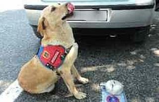Narkotik Köpeği Ezel Uyuşturucuya Geçit Vermiyor...