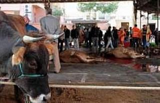 Samsun'da Kurbanlıklar Kesilmeye Başlandı