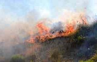Söke'de Korkutan Yangın