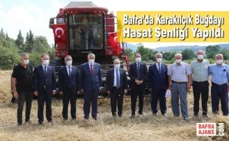 Bafra'da Karakılçık Buğdayı Hasat Şenliği Yapıldı