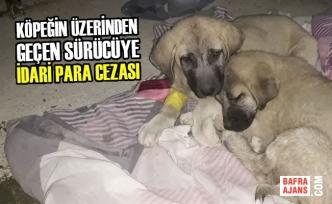 Köpeğin Üzerinden Geçen Sürücüye Para Cezası