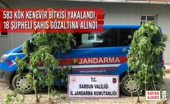 583 Kök Kenevir Bitkisi Yakalandı, 18 Şüpheli Şahıs Gözaltına Alındı