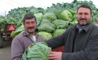 Bafra'da Lahana Fiyatları Düştü