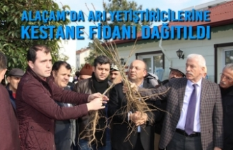 Alaçam'da Arı Yetiştiricilerine Kestane Fidanı Dağıtıldı