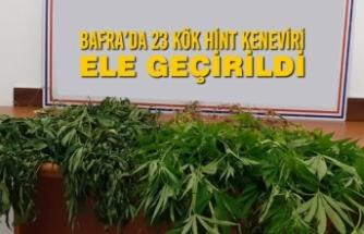 Bafra'da 23 Kök Hint Keneviri Ele Geçirildi