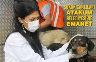 Sokak Canlıları Atakum Belediyesi'ne Emanet