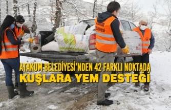 Atakum Belediyesi'nden 42 Farklı Noktada Kuşlara Yem Desteği