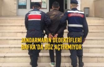 Jandarmanın Dedektifleri Bafra'da Göz Açtırmıyor