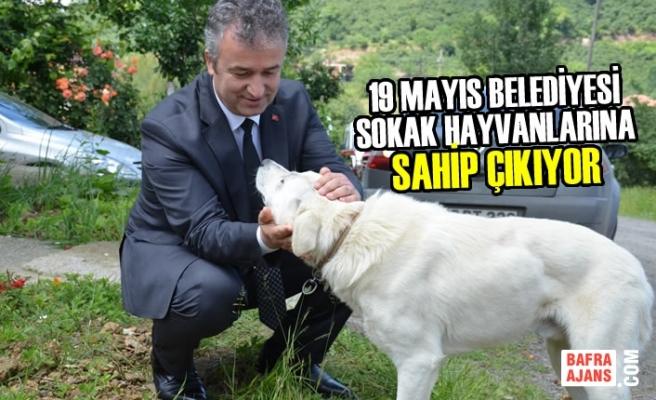19 Mayıs Belediyesi Sokak Hayvanlarına Sahip Çıkıyor