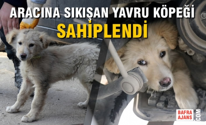 Aracına Sıkışan Yavru Köpeği Sahiplendi