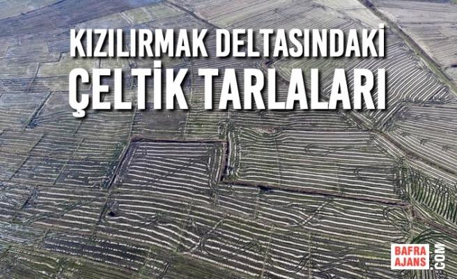 Kızılırmak Deltasındaki Çeltik Tarlaları