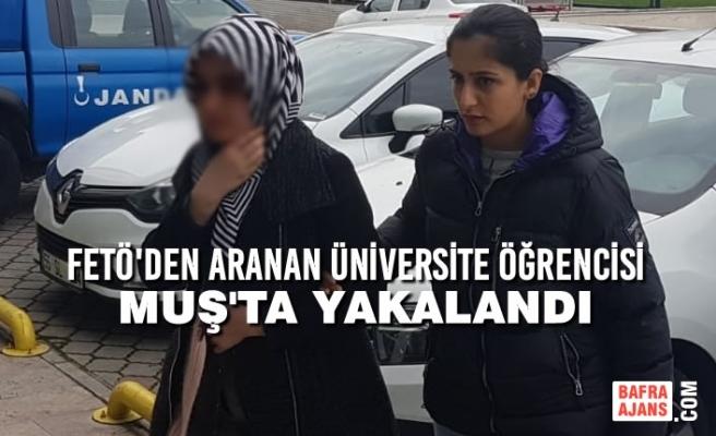 FETÖ'den Aranan Üniversite Öğrencisi Muş'ta Yakalandı