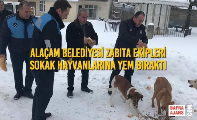 Alaçam Belediyesi Sokak Hayvanlarına Yem Bıraktı