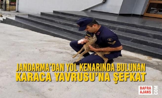 Jandarma'dan Yol Kenarında Bulunan Karaca Yavrusu'na Şefkat