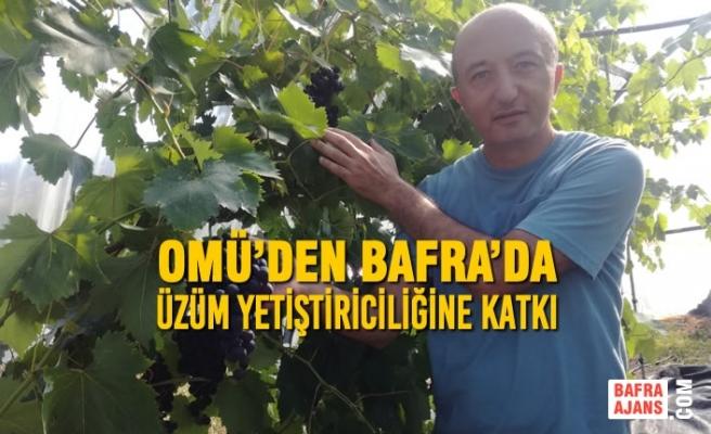 OMÜ'den Bafra'da Üzüm Yetiştiriciliğine Katkı