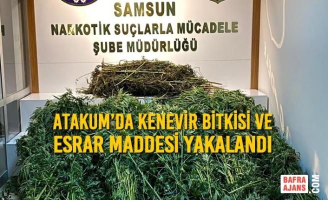 Atakum'da Kenevir Bitkisi ve Esrar Maddesi Yakalandı