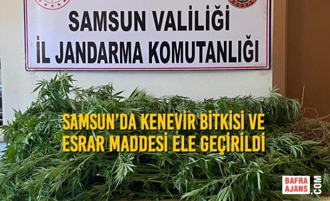 Samsun'da Kenevir Bitkisi ve Esrar Maddesi Ele Geçirildi