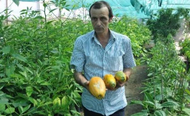 Alanya'ya Has 3 Meyveye Patent Başvurusu