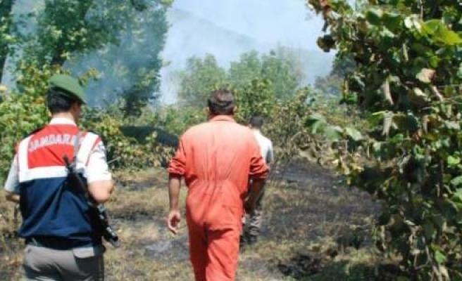 Alaplı'da Fındık Bahçesinde Yangın