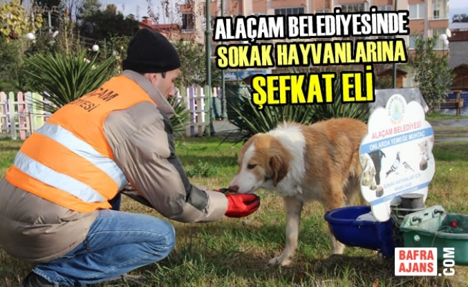 Alaçam Belediyesinde Sokak Hayvanlarına Şefkat Eli
