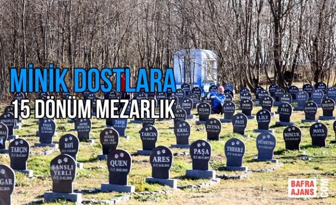 Minik Dostlara 15 Dönüm Mezarlık