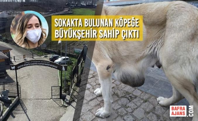 Sokakta Bulunan Köpeğe Büyükşehir Sahip Çıktı