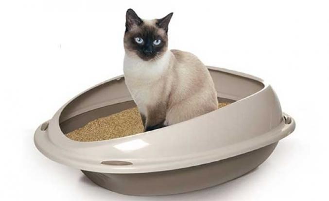 Kedilerde Tuvalet Eğitimi Nasıl Olur?