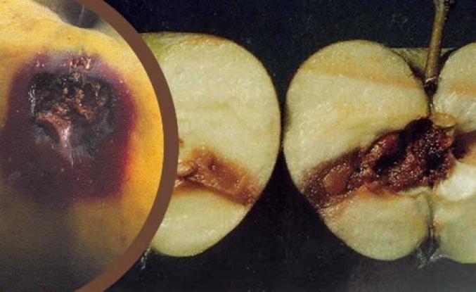 Meyve Üreticileri İçin İlaçlama Zamanı