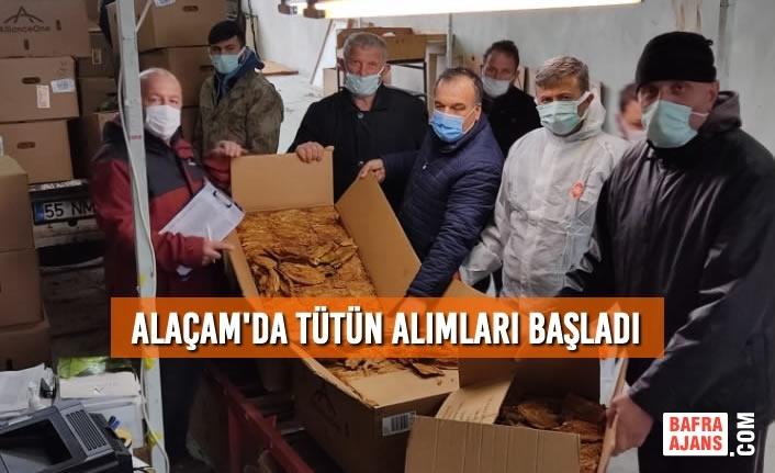 Alaçam'da Tütün Alımları Başladı